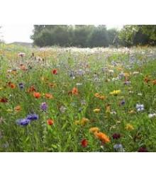 Zmes lúčnych kvetín a bylín - semiačka - 0,9 gr