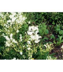 More about Túžobník obyčajný - Filipendula vulgaris - semiačka - 0,3 gr