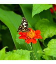 Zmes kvetín pre motýle - semiačka - 3 gr
