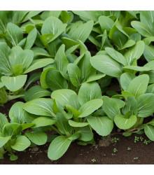 Komatsuna - Zelená horčica - semiačka - 20 ks