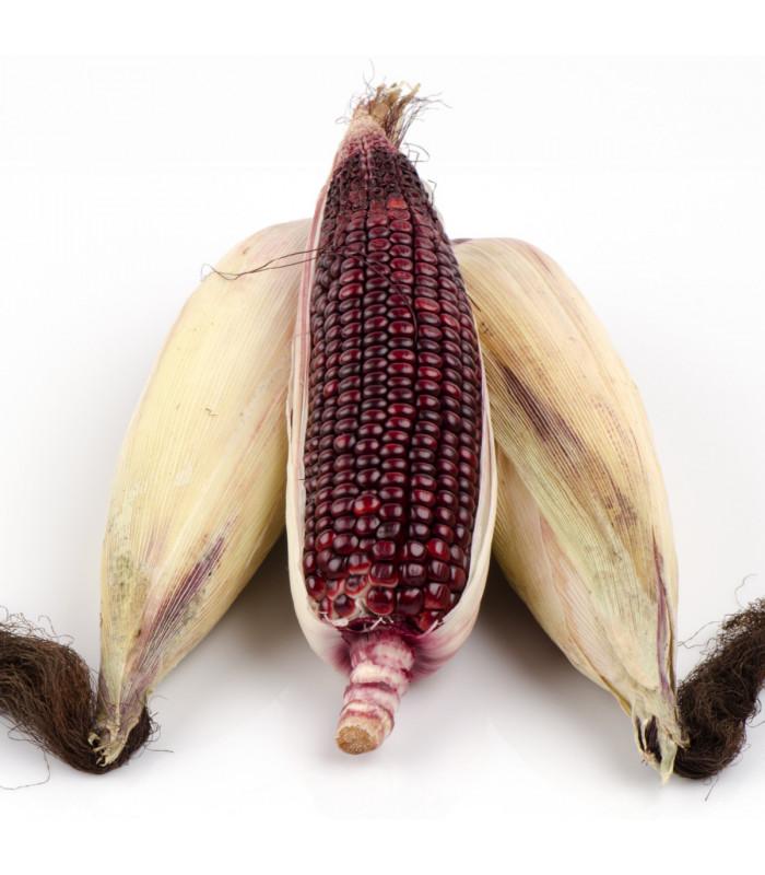 Kukurica jahodová - Zea mays multicolor - semiačka - 20 ks