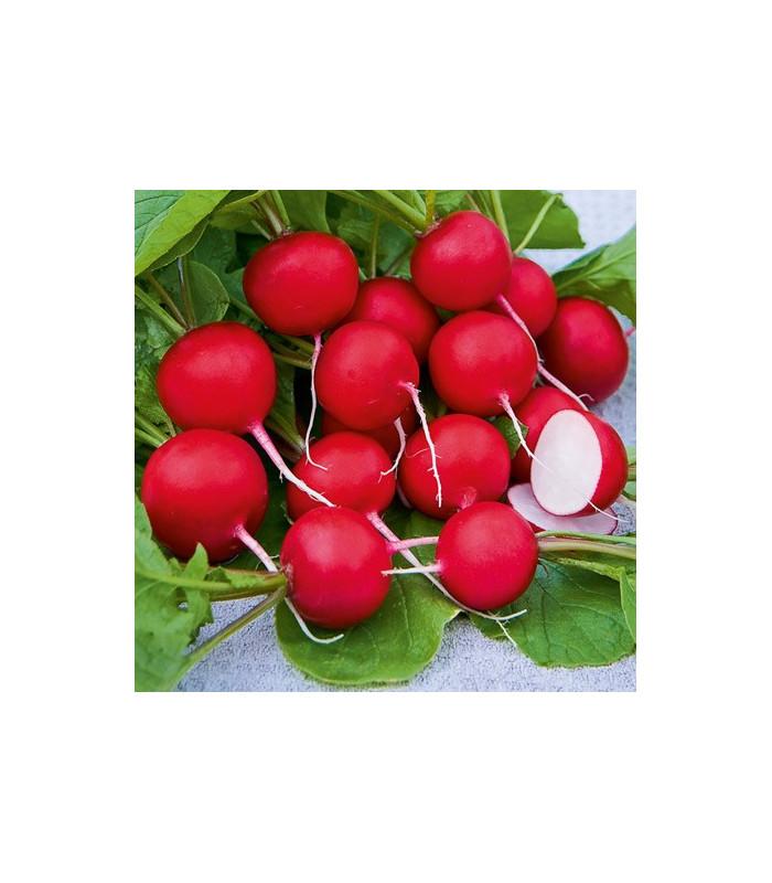 Reďkovka Saxa - semiačka - 0,5 gr