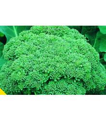 Brokolica Calabrese - Brassica oleracea L. - semiačka - 180 ks