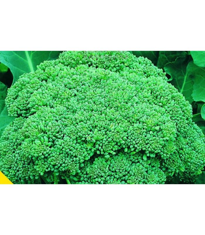 Brokolica Calabrese - Brassica oleracea L. - semiačka - 0,9 gr