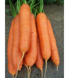 Mrkva neskorá Cidera - Daucus carota - semiačka - 1 gr
