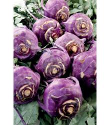 Kaleráb skorý modrý Blankyt - Brassica - semiačka - 50 ks