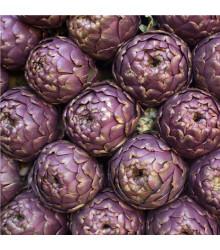 Artičoka fialová - Cynara scolymus - semiačka - 1 gr