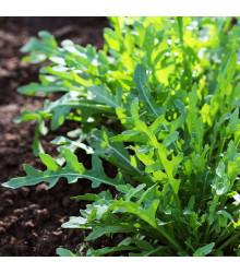 Rukola divá Sprint - Eruca selvatica - semiačka - 0,2 gr
