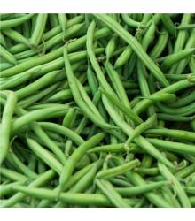 Fazuľa kríčková Saxa - Phaseolus vulgaris - semiačka - 20 ks