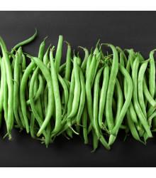 Fazuľa kolíková Primel - Phaseolus vulgaris - semiačka - 20 ks