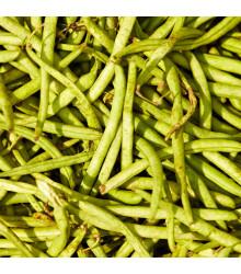 Fazuľa záhradná kolíková Hilda - Phaseolus vulgaris L. - semiačka - 20 ks