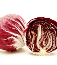 Čakanka šalátová Palla rosa - Cichorium intybus - semiačka - 200 ks