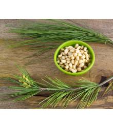 Borovica gerardiana - Pinus gerardiana - semiačka - 5 ks