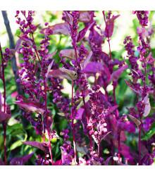 Lebeda záhradná Scarlet - Atriplex hortensis - semiačka - 60 ks