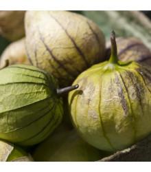 Tomatillo Cisineros - semiačka - 7 ks