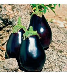 Baklažán český skorý - Solanum melangena - semiačka - 100 ks