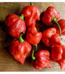 Chilli Trinidad Scorpion Butch - Capsicum sinense - Semená - 5 ks