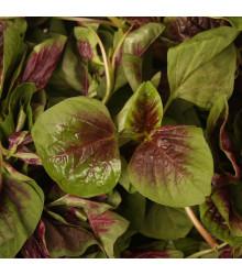 Láskavec trojfarebný, červený - Amaranth červený - Amaranthus tricolor - 0,2 gr
