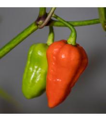 Chilli 7 Pod červené - Predaj chilli semien - 6 ks