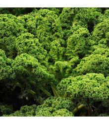 Kel Lerchenzungen - Brassica oleracea L. - semena kelu - 150 ks