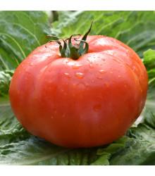 Paradajka Soldaki - Predaj semien paradajok - 7 ks