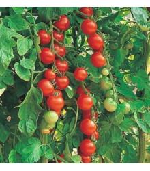 Paradajka Sweetie - Semená paradajok - 6 ks