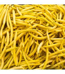 Fazuľa kríčková Golddukat - Phaseolus vulgaris - predaj semien - 20 ks