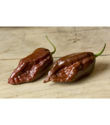 Chilli Black Naga - Capsicum chinense - Predaj semien - 6 ks