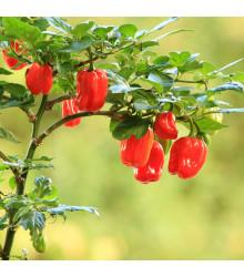 Chilli Scotch Bonnet červené - Capsicum chinense - Predaj semien chilli - 6 ks