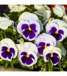 Sirôtka Silberbraut - Viola wittrockiana - predaj semien sirôtky - 200 ks