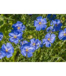 Ľan modrý - Linum perenne - semená ľanu - 0,5 g