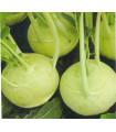 Kaleráb extra jemný - rastlina Brassica oleracea - predaj semien kaleráby - 50 ks
