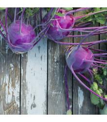 Kaleráb raný modrý Purple vienna - rastlina Brassica oleracea - predaj semien kalerábov - 100 ks
