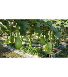 Indická uhorka Lagenárie Dipper - Cucurbita Lagenaria - semená tekvice - 6 ks