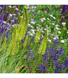 Bylinková kytička - 50 g - Semená