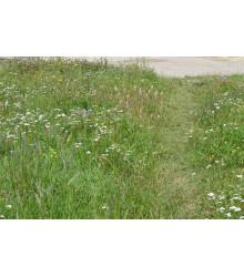 Zelený chodníček - Semená - 50 g