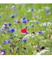 Česká kvetnice - zmes semien - 50 g