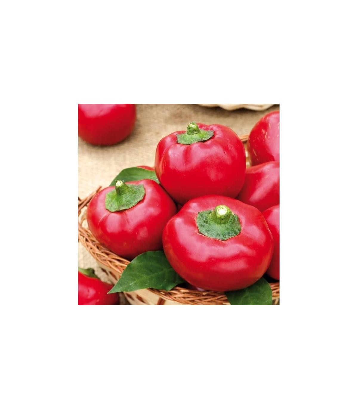 Paradajková paprika Topgirl - Capsicum annuum - 7 ks