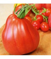 Kolíková paradajka Coure di Bue - Lycopersicon lycopersicum - Predaj semien - 10 ks