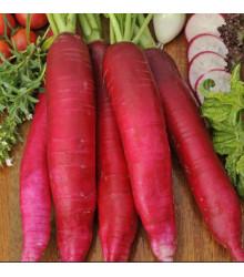 Bio reďkev Ostergruss Rosa 2 - Raphanus sativus - Predaj semien - 0,3 g