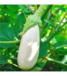 Baklažán Casper - Solanum melongena - predaj semien - 7 ks