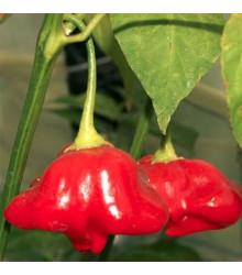 Chilli Mushroom červené - Capsicum Chinenses - Predaj chilli semienok - 6 ks