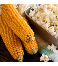 Kukurica pukancová F1 Nananu - Zea Mays - semená kukurice - 15 ks