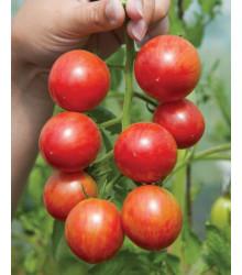 Paradajka Artisan Pink Bumble Bee - Kolíková - Predaj semien paradajok - Lycopersicon esculentum - 5 ks