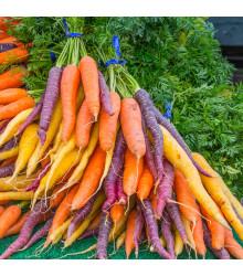 Mrkva letná Rainbow F1 - Daucus carota - semená mrkvy - 50 ks