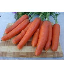 Mrkva Aneta F1 - Daucus carota - osivo mrkvy - 1 gr