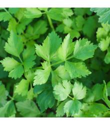 Zeler listový kučeravý Pikant - Apium graveolens var. Secalinum - semiačka - 400 ks