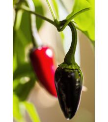 Chilli - Čierne maďarské - Semená - 6 ks