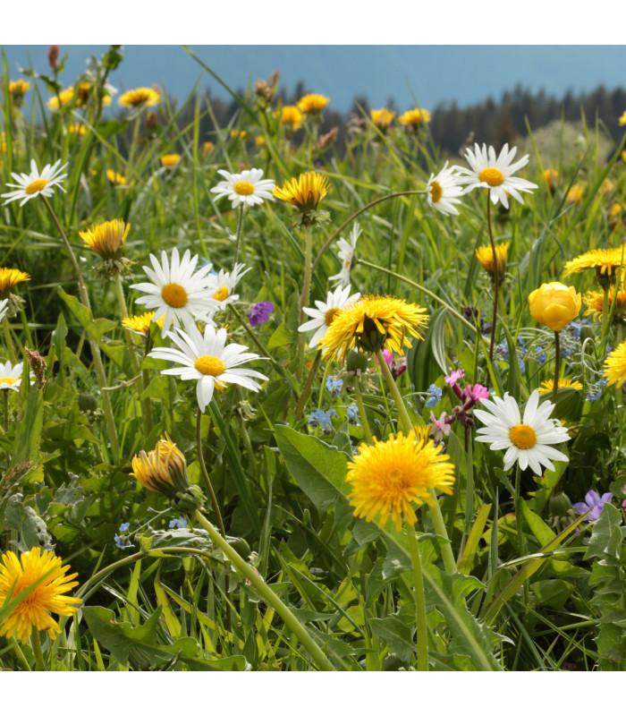 Horská lúka - Zmes semien - 50 g