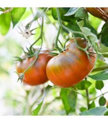Paradajka Brandywine čierne - predaj semien paradajok - 7 ks